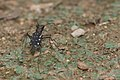 Lophyra-Kadavoor-2016-04-05-002.jpg