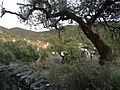LosMadronnales-P1040669.JPG