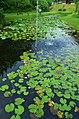 Lotus park - panoramio.jpg