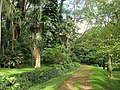 Lyon Arboretum, Oahu, Hawaii - trail.jpg