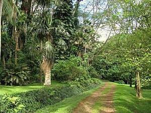 Lyon Arboretum - Trail