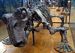 水龍獸的骨架模型,巴黎自然歷史博物館