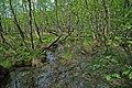 MG 0777 Schlaubetal Sumpflandschaft1a am Forsthaus Siehdichum.jpg