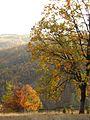 Magleš - zapadna Srbija - kanjon reke Gradac - Šuma u jesen detalj 7.jpg