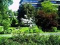 Mai - Botanischer Garten Freiburg - 2016 - panoramio (10).jpg