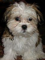 Image Result For Shed Dog Training