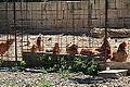 Malta - Birkirkara - Triq l-Imdina 04 ies.jpg