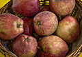 Malus Red Delicious 4292.jpg