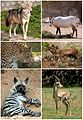 Mammals of the Levant.jpg