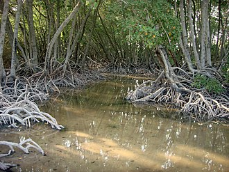Moucha Island - Image: Mangrove des iles moucha