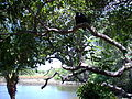 Mangue, Sapiranga,Fortaleza, Ceará, Brasil2.JPG