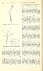 Manual of the grasses of the United States (Page 242) BHL42020881.jpg
