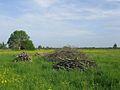 Marais Audubon Couëron France.jpg