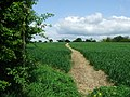 Marked Footpath - geograph.org.uk - 1284060.jpg