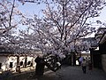 Marunouchi, Matsuyama, Ehime Prefecture 790-0008, Japan - panoramio (117).jpg