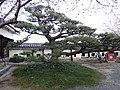 Marunouchi, Matsuyama, Ehime Prefecture 790-0008, Japan - panoramio (130).jpg