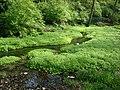 McConnell Springs, stream.jpg