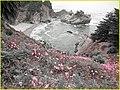 McWay Falls Flowers, Big Sur, Chris (13387800883).jpg