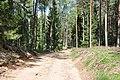 Meža ceļš - panoramio (19).jpg