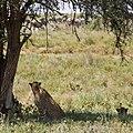 Meatu, Tanzania - panoramio (10).jpg