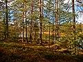 Metsässä Heinijärven maastossa - panoramio.jpg