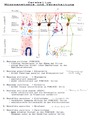Microanatomy and Wiring of Cerebellum.tif