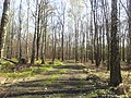 Mikolow, Poland - panoramio (131).jpg