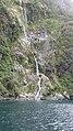 Milford Sound, South Island - panoramio (16).jpg