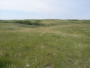 Canadian Prairies - Native grasslands in southern Saskatchewan