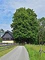 Mitterbach am Erlaufsee - Naturdenkmal LF-025 - Linde - 1.jpg