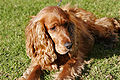 Mix breed dog.jpg