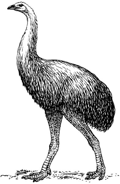 Aves que han desaparecido