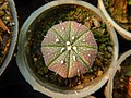 Mobarakabad, Qom-Cactaceae in Iran گلخانه کاکتوس، روستای مبارک آباد قم 18.jpg