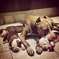 Mom and her pups.JPG