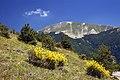 Monte Catria NW.jpg