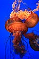 Monterey Bay Aquarium (4130802645).jpg