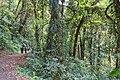 Monteverde Reserve Costa Rica 16.jpg