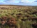 Moorland above Kielder - geograph.org.uk - 1546613.jpg