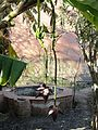 Morocco Marrakesh banana tree 2.JPG