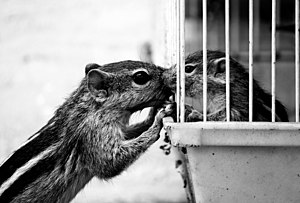 Emotion in animals - A squirrel communicating with its pup
