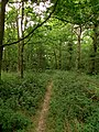 Moulsham Thrift Wood - August 2015 - panoramio.jpg