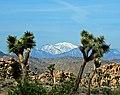 Mt. San Gorgonio from Joshua Tree NP 3-18-17 (33377445052).jpg