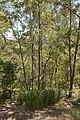 Mt Gravatt Outlook bush (6980498800).jpg