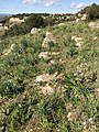 Mura dionigiane sull'Epipoli lato sud.jpg