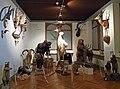Musée zoologique de Strasbourg-Acquisitions récentes.jpg
