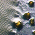 Myxococcus xanthus rippling.png