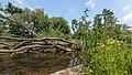 NSG Rurauenwald-Indemuendung FFH-Gebiet Indemündung Ufervegetation III.jpg