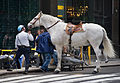 NYC - Mounted policeman - 0437.jpg