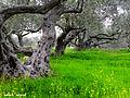 Nablus 7.jpg