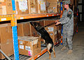 National Police Week Military Working Dog Detection Challenge DVIDS172487.jpg